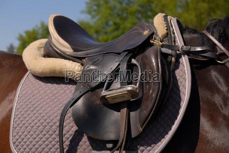 saddle - 635426