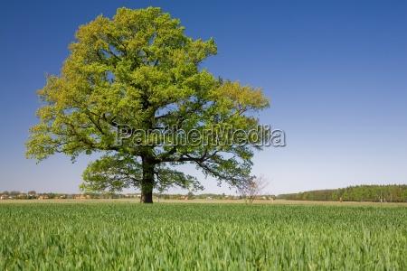 tree - 638873