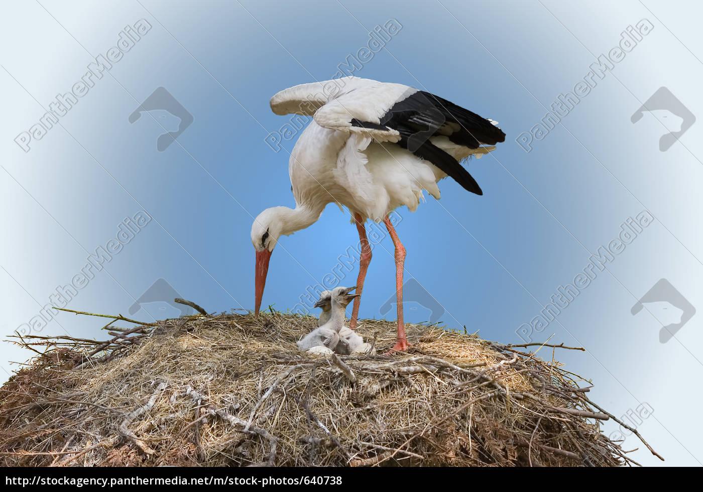 ..., freshly, hatched - 640738