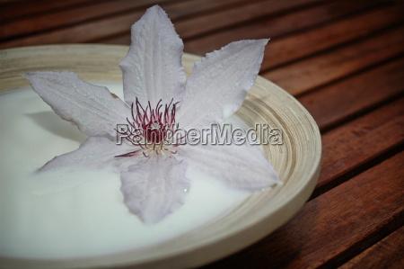 flowers, dairy - 643777