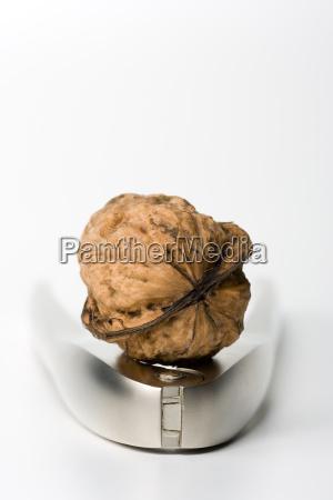 walnut, on, nutcracker - 646653