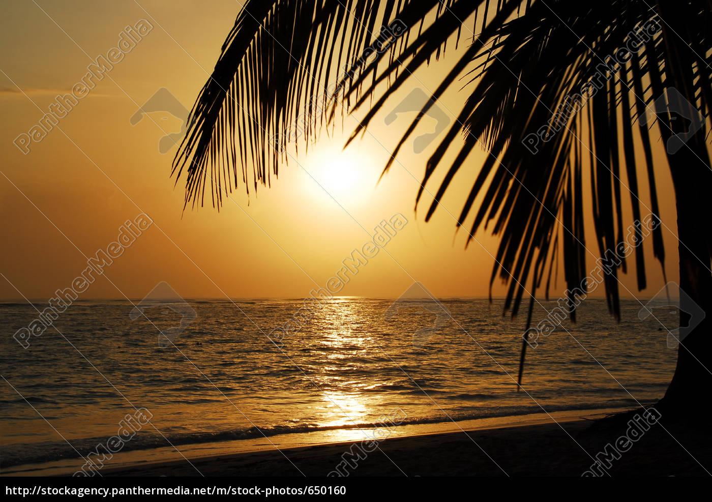 sunrise, palm - 650160