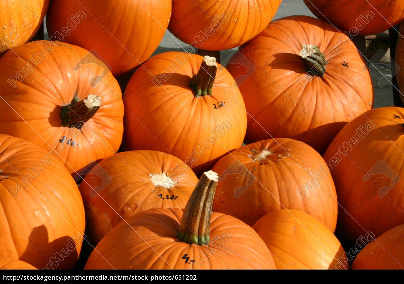 pumpkins - 651202