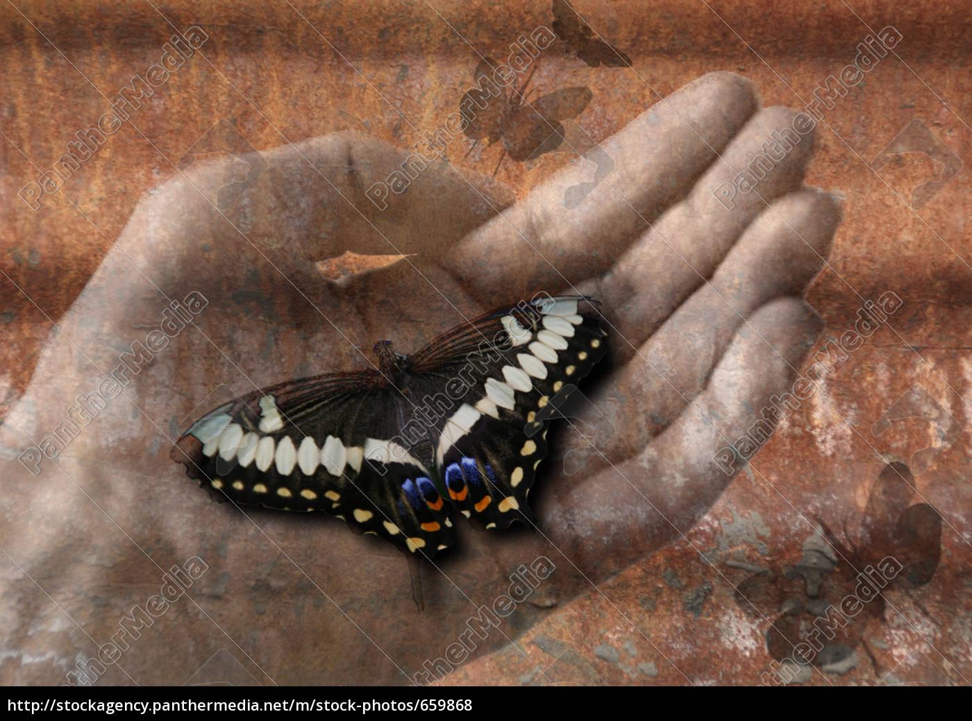 butterfly - 659868