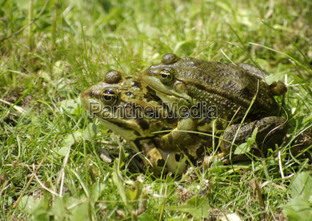 biplane, frog - 662718