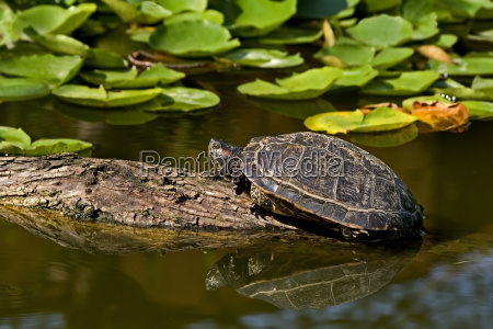 turtle - 663880