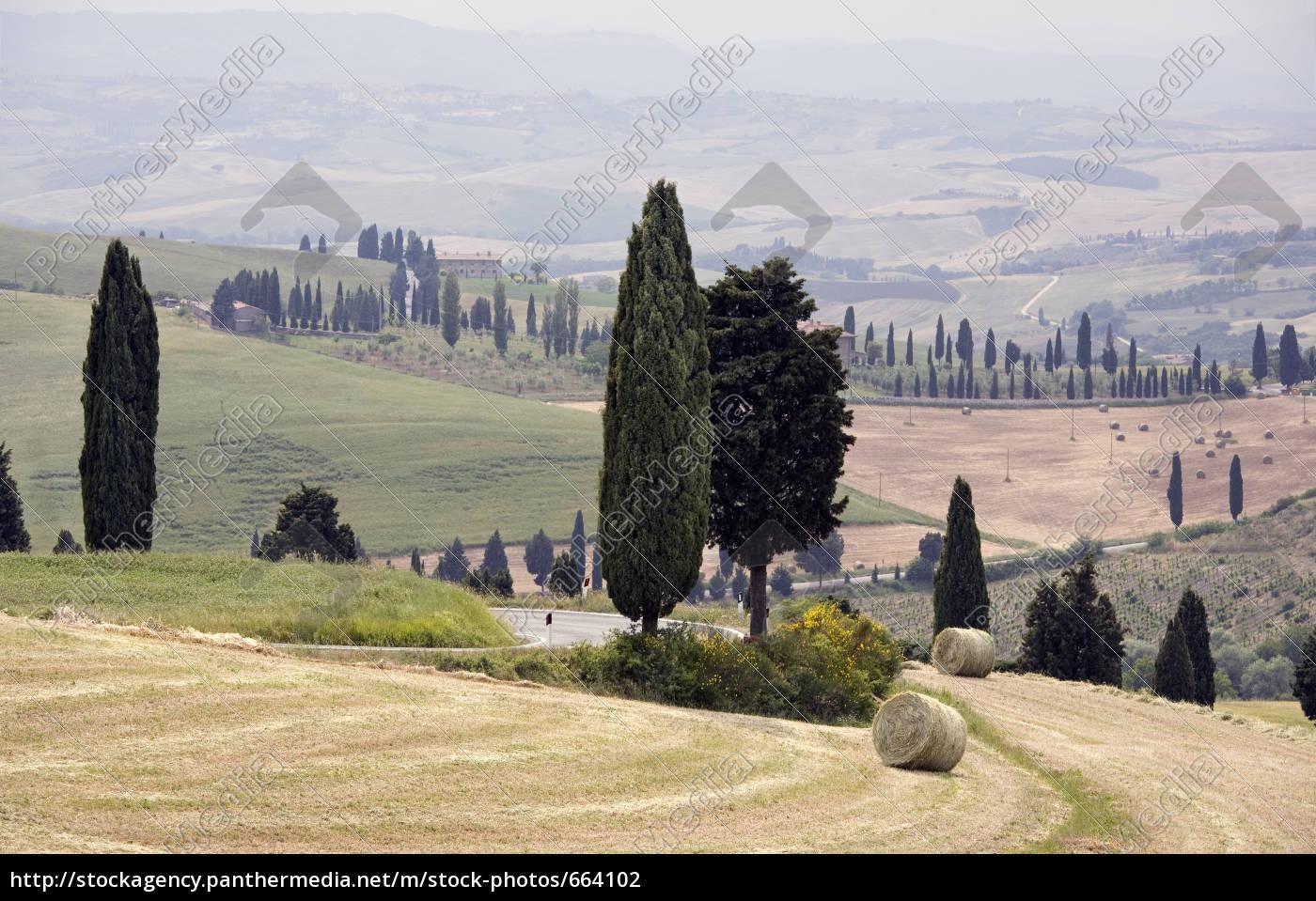 cypress, landscape - 664102