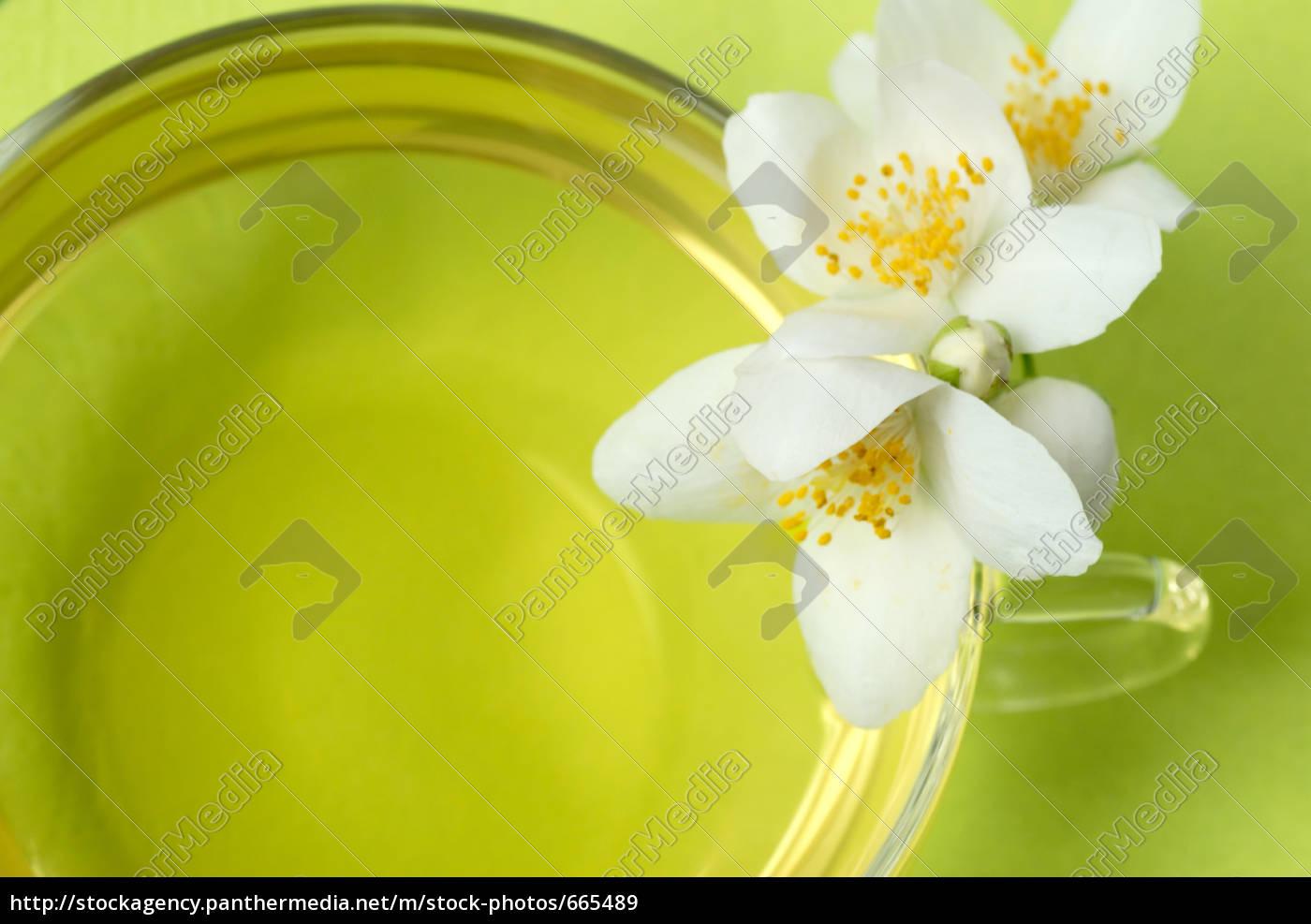 macro, of, jasmine, on, green - 665489