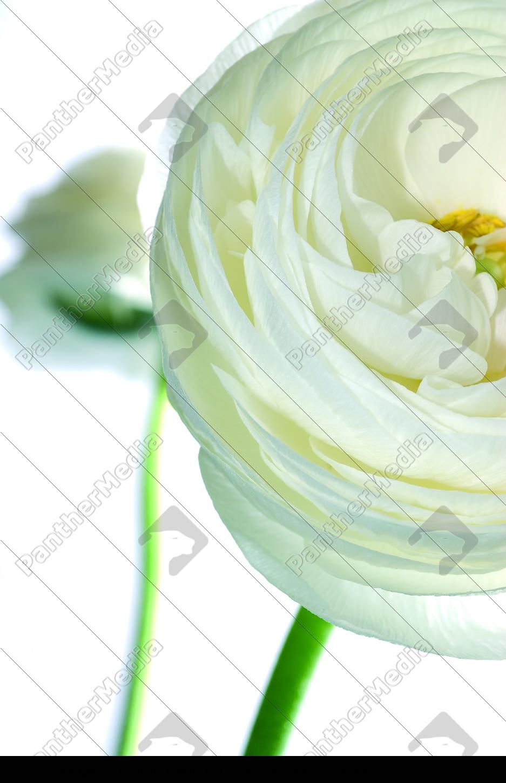 white, raindrops - 669884