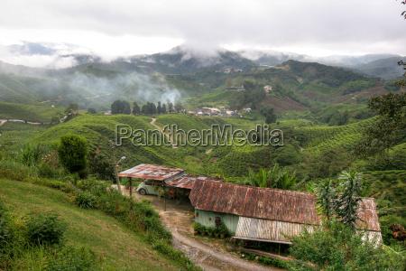 tea, plantation, in, the, morning, mist - 672855