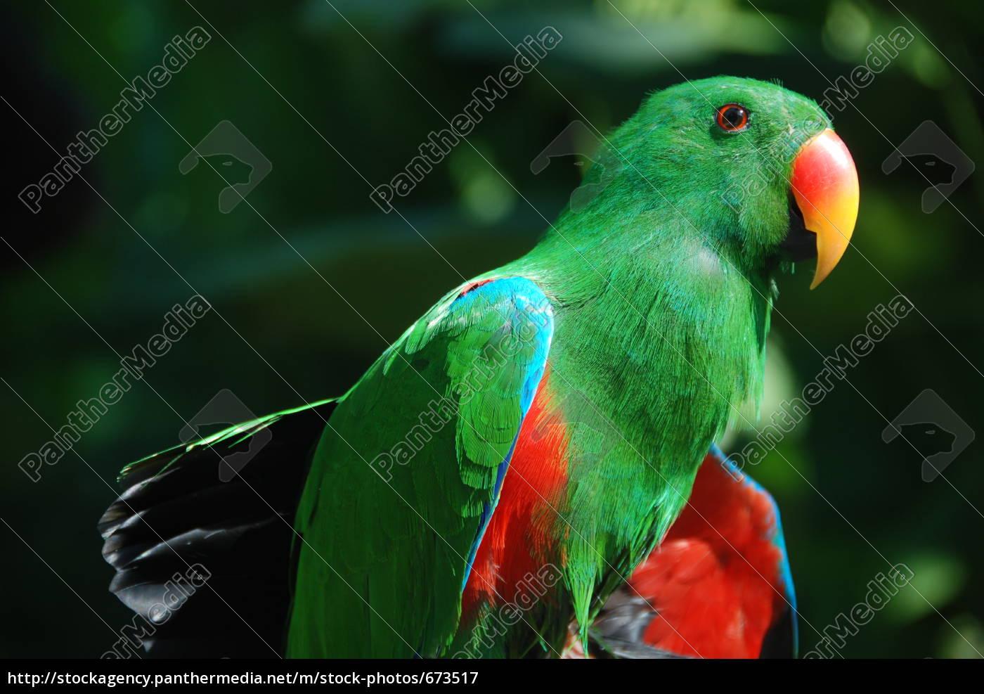 parrot, in, bali - 673517