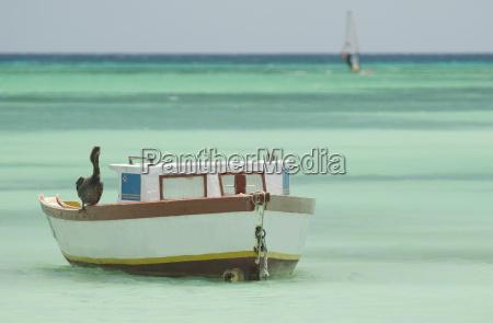 sea, food, in, aruba - 674269