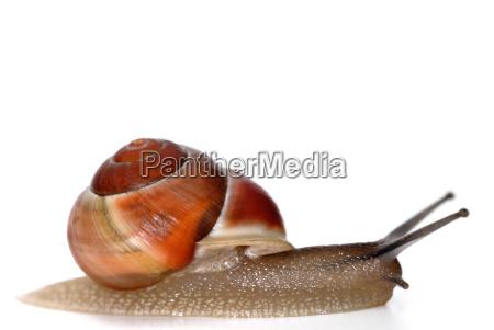 slug - 674830