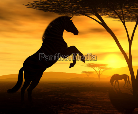 african, spirit, vii - 675597
