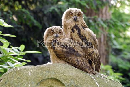 owls - 676602