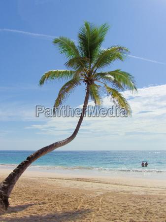 palm - 676146