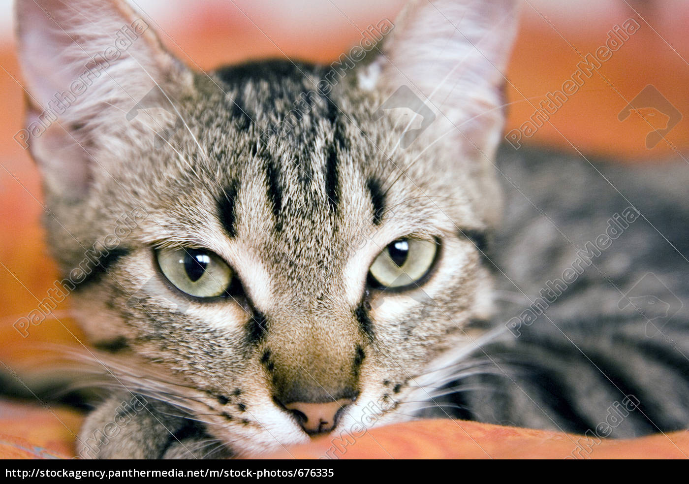 young, cat - 676335
