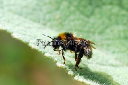 bumblebee - 677381