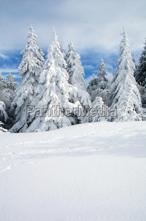 winter landscape 7