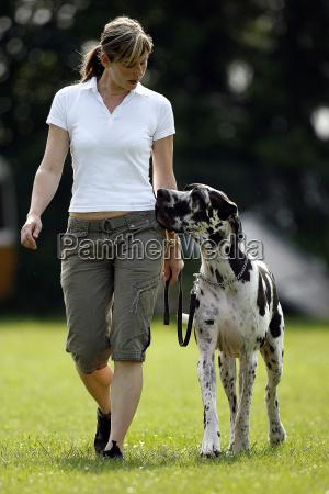 dog, training - 679488