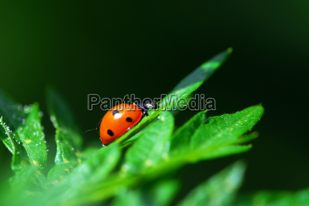 ladybird - 679246