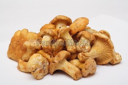 mushroom - 681330