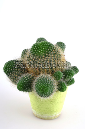 prickly - 681113