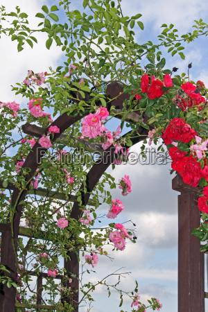 rosenbogen - 681722