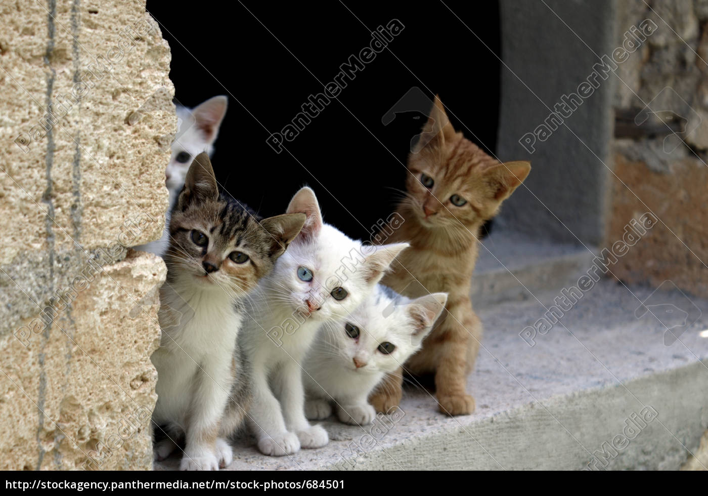 five, friends - 684501