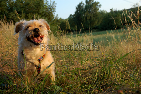 smiling, dog - 689321