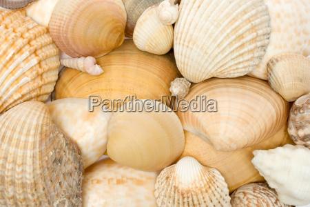 shellfish - 696521