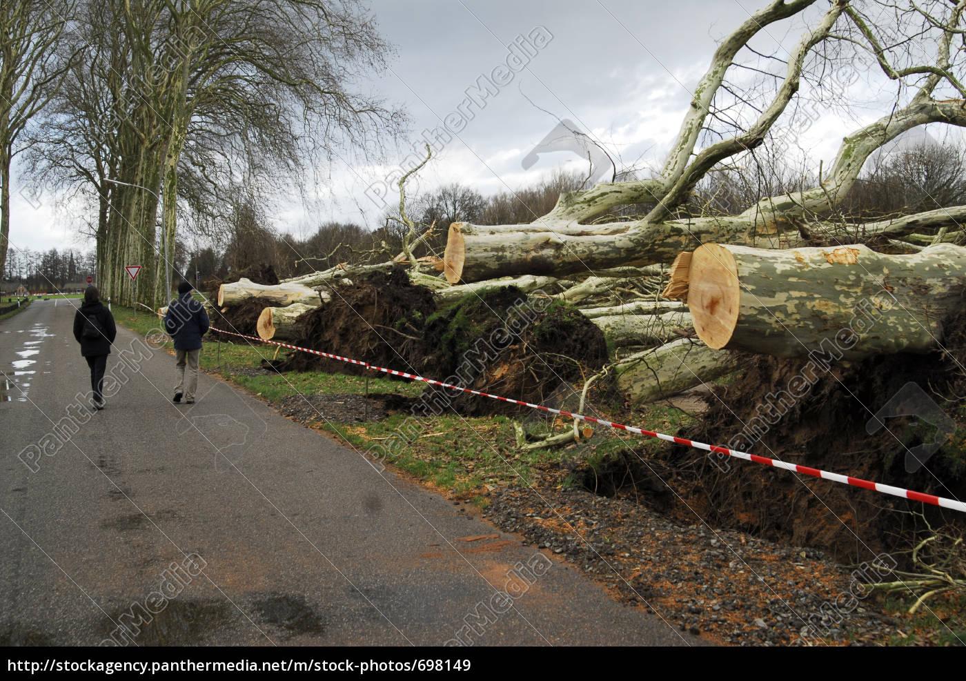 storm, damage - 698149