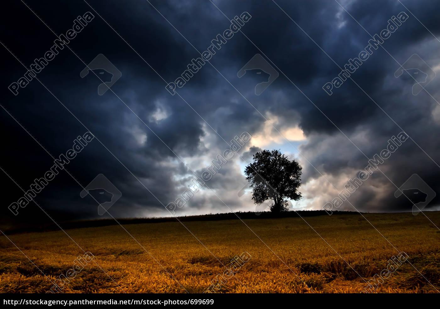 thunderstorm, tree - 699699