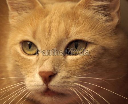 ..., cat, eyes, ... - 710788