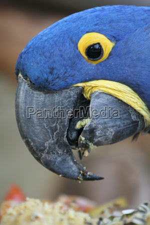 parrot with food