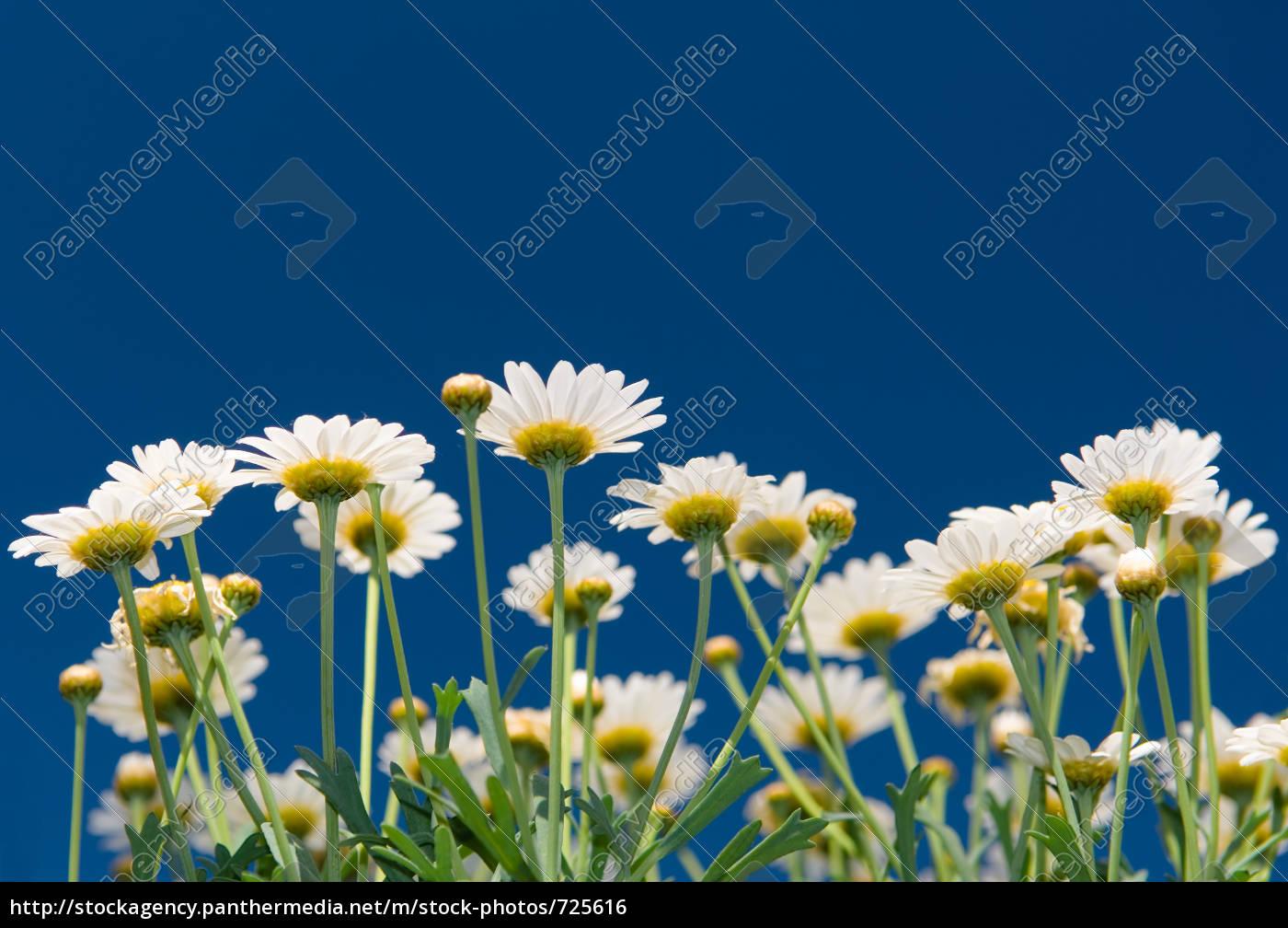 garden, flowers - 725616