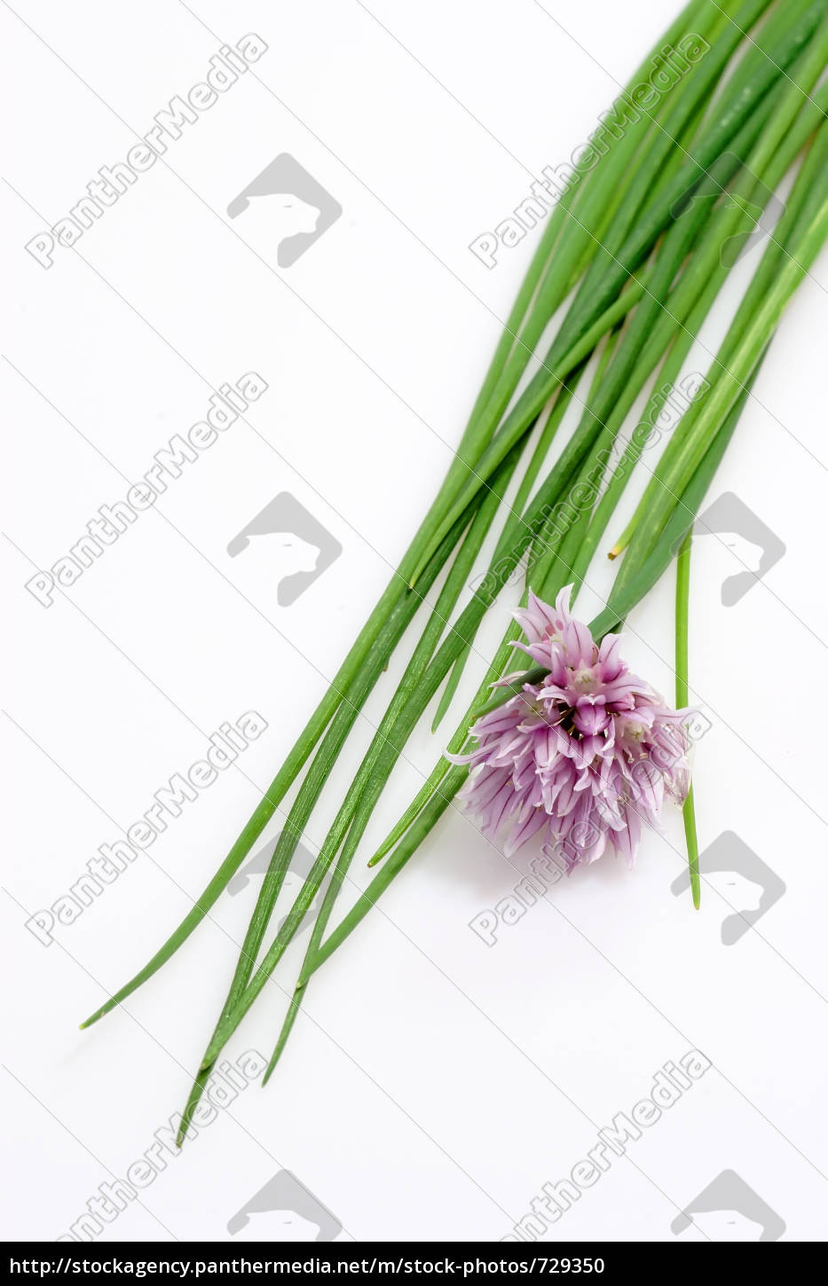 chives - 729350