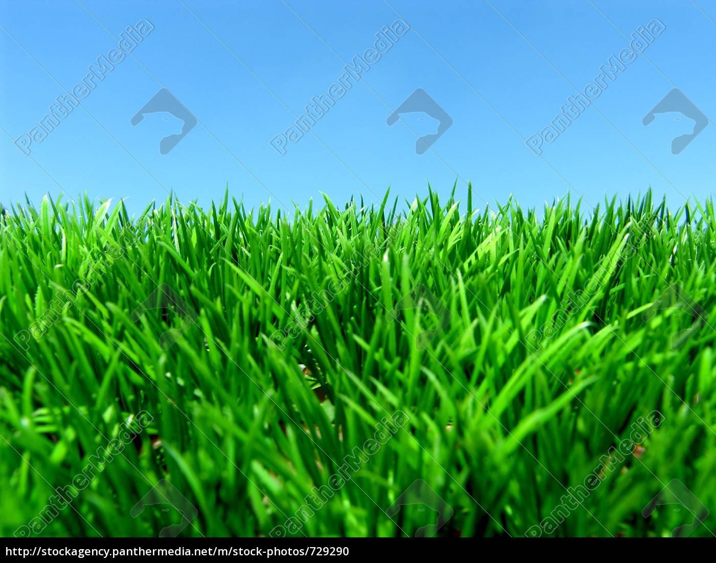 meadow - 729290