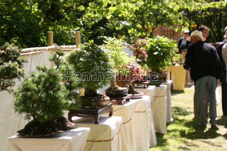 bonsai, exhibition - 730020
