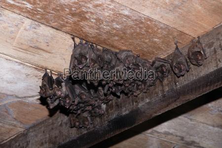 bats, 1 - 735612