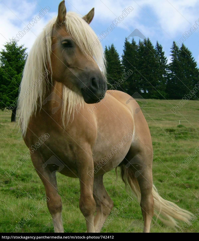 horse - 742412