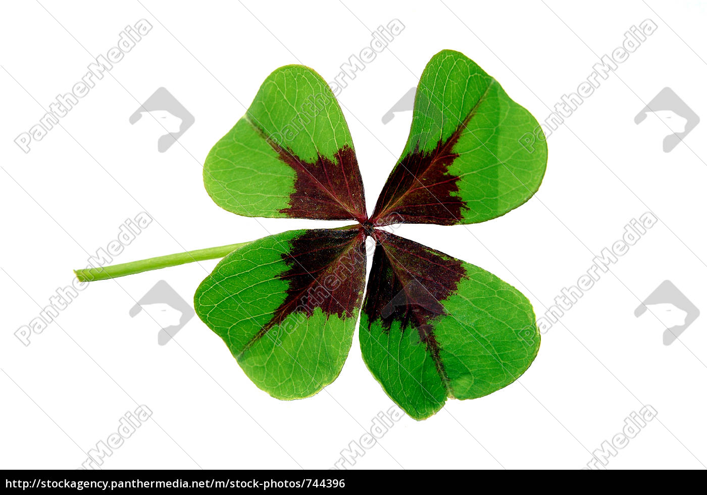 lucky, clover - 744396