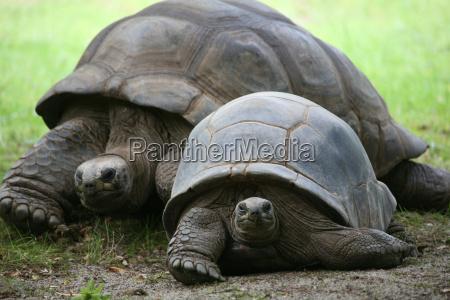 seychelles, giant, tortoise - 751494