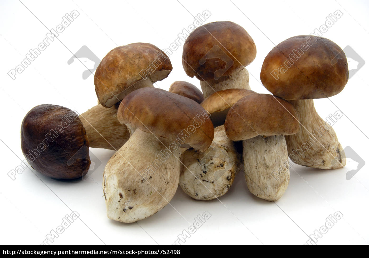 mushrooms - 752498
