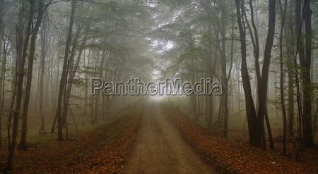 foggy, day - 755417