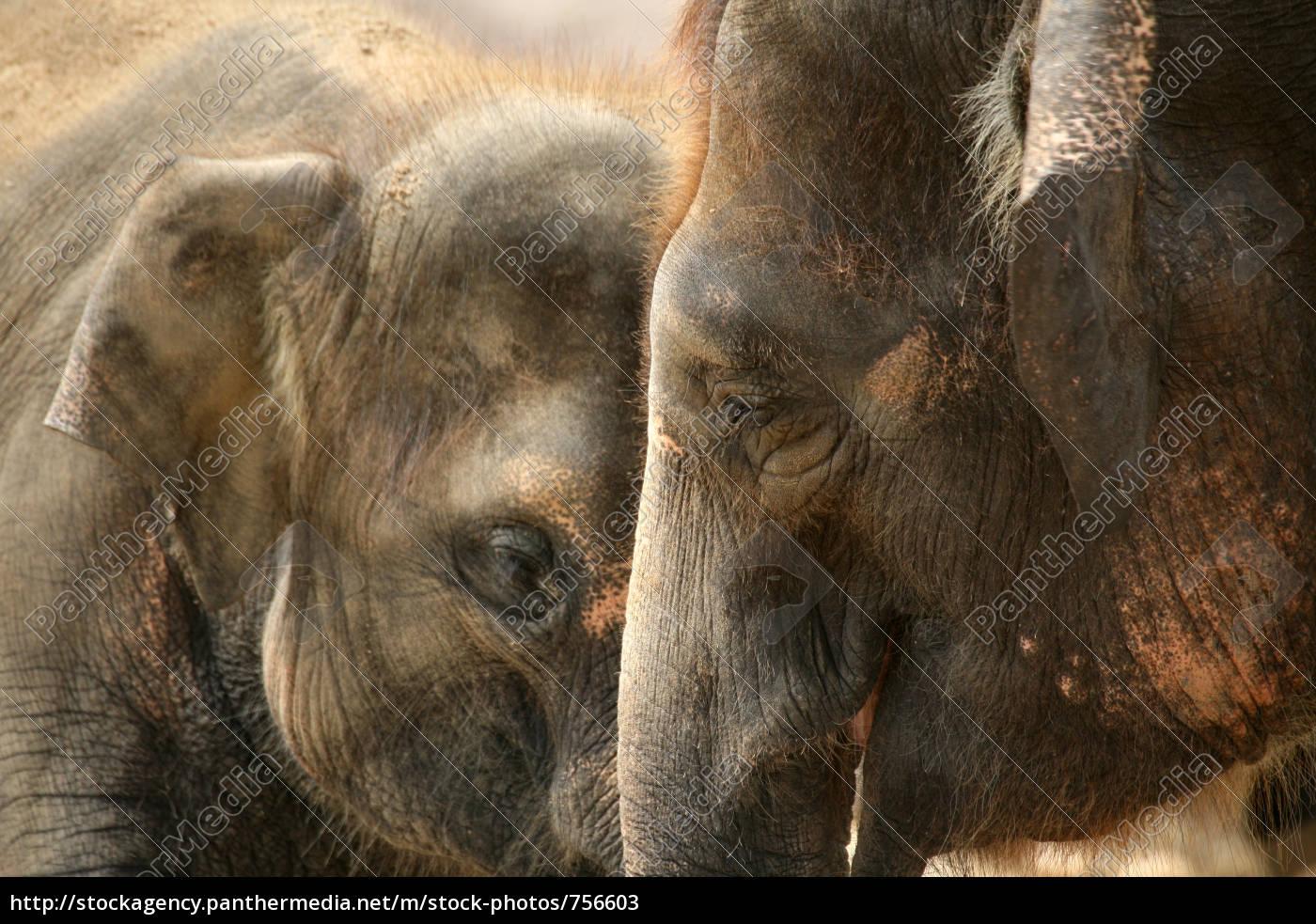elephants - 756603