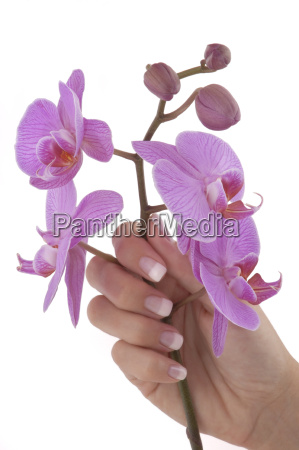 fingernails - 758825