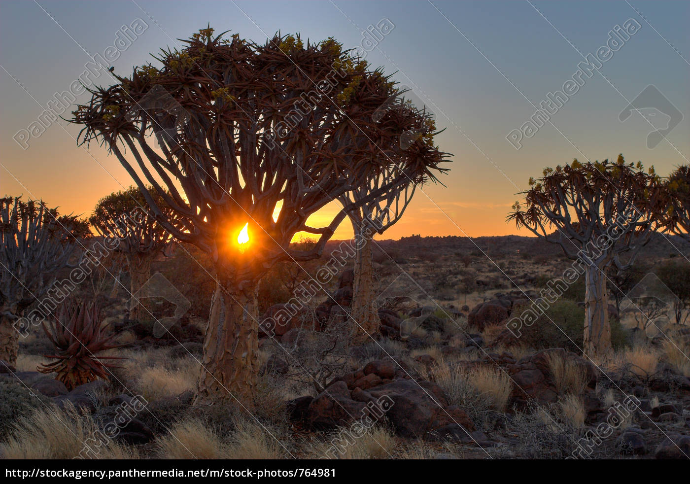 quiver, tree, forest, ii - 764981