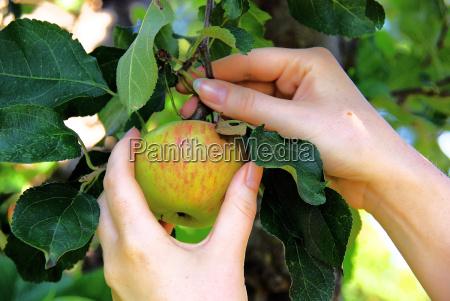 apple, 02 - 766291