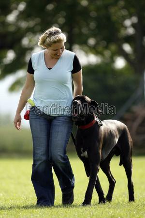 dog, training - 770055